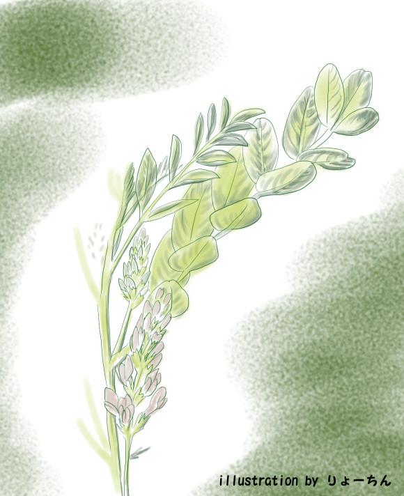herb_rikorisu2